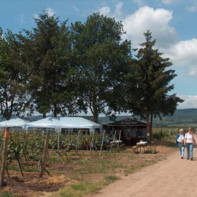 Kulinarische Weinwanderung 1 20131102 2048610956