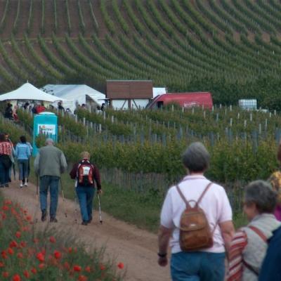 Kulinarische Weinwanderung 4 20131102 1994793494